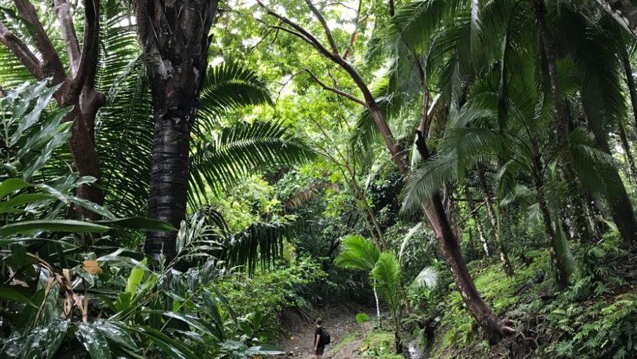 Dschungel Quepos